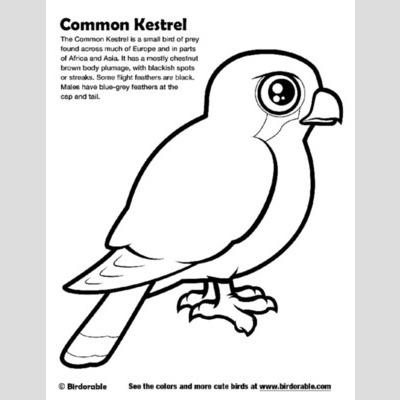 Kestrel coloring #3, Download drawings