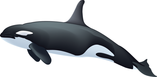 Killer Whale clipart #20, Download drawings