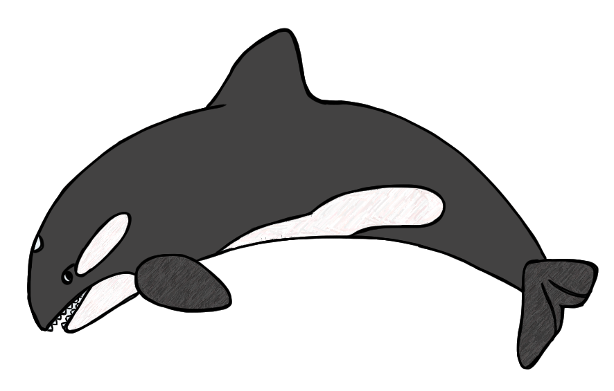 Killer Whale clipart #12, Download drawings