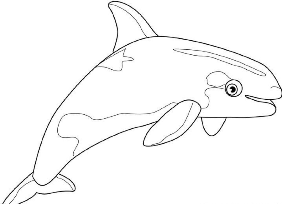 Killer Whale coloring #11, Download drawings