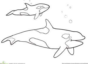 Killer Whale coloring #6, Download drawings