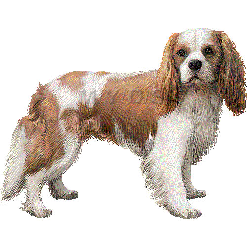 King Charles Spaniel clipart #19, Download drawings