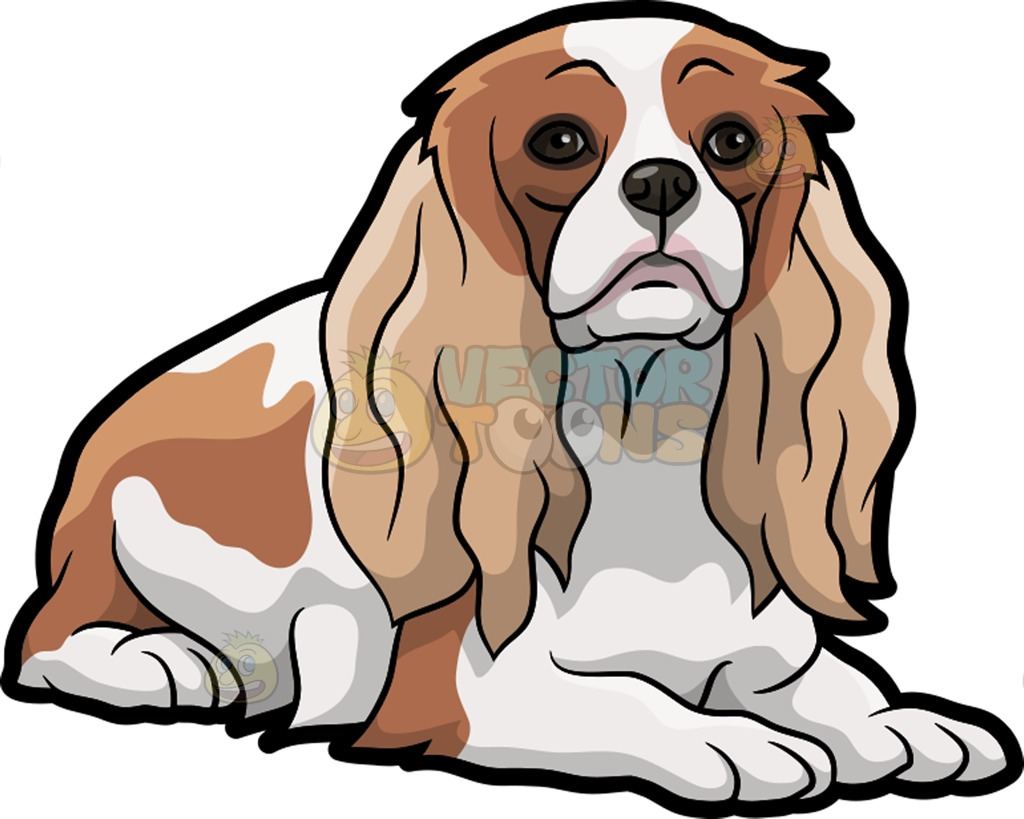King Charles Spaniel clipart #20, Download drawings
