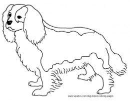 King Charles Spaniel coloring #11, Download drawings