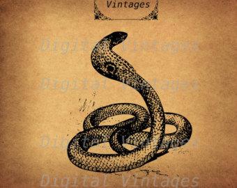 King Cobra svg #10, Download drawings