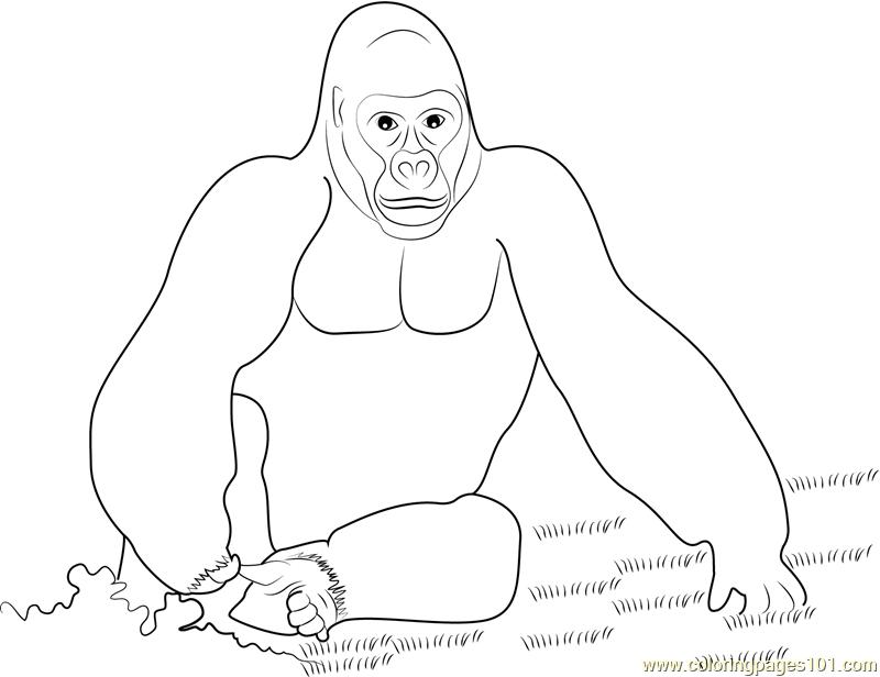 King Kong coloring #2, Download drawings