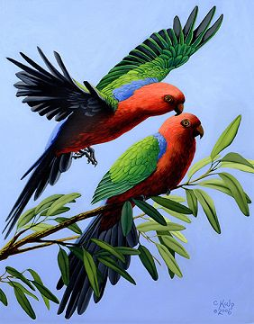 King Parrot clipart #8, Download drawings