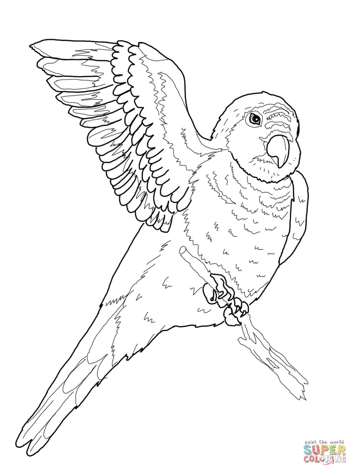 King Parrot coloring #16, Download drawings