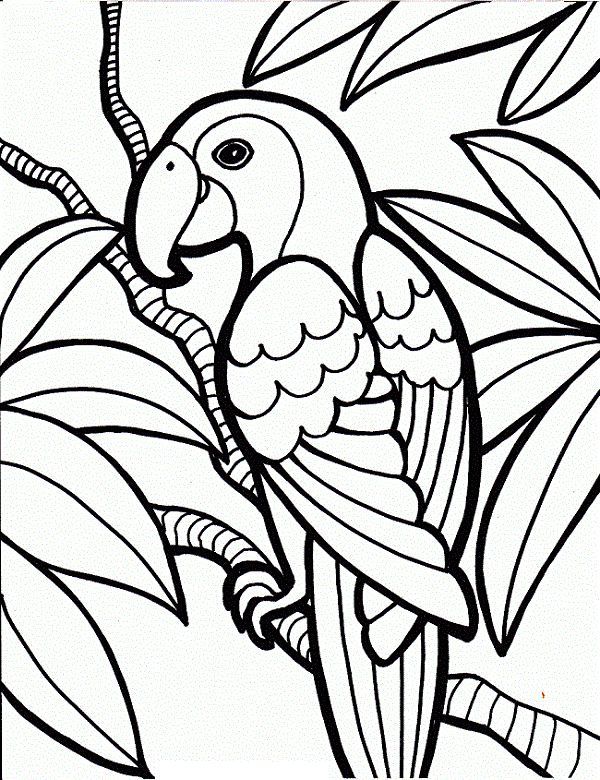 King Parrot coloring #10, Download drawings