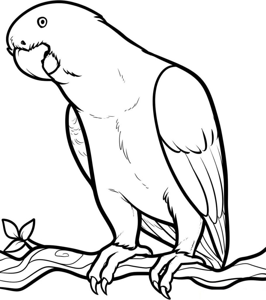 King Parrot coloring #14, Download drawings