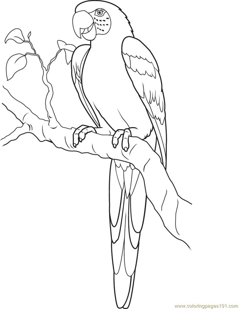 King Parrot coloring #4, Download drawings