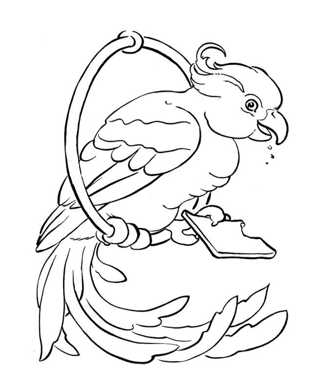 King Parrot coloring #5, Download drawings