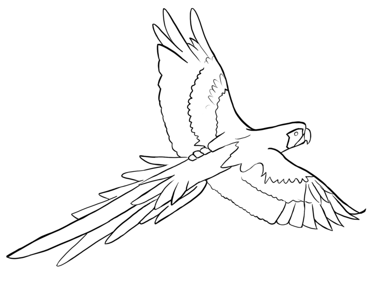 King Parrot coloring #8, Download drawings
