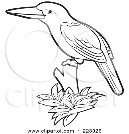Kingfisher clipart #11, Download drawings