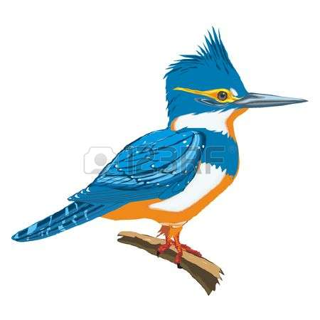 Kingfisher clipart #8, Download drawings
