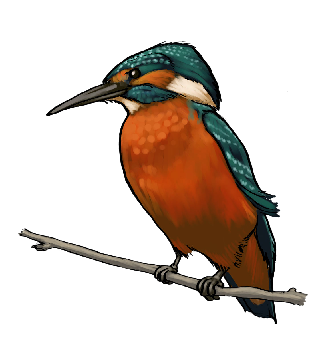 Kingfisher clipart #6, Download drawings