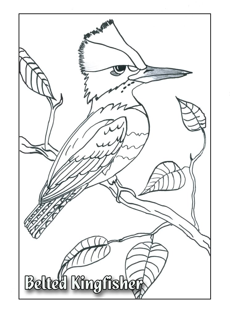 Kingfisher coloring #14, Download drawings