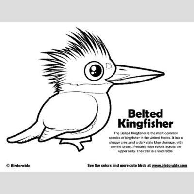 Kingsfisher coloring #11, Download drawings