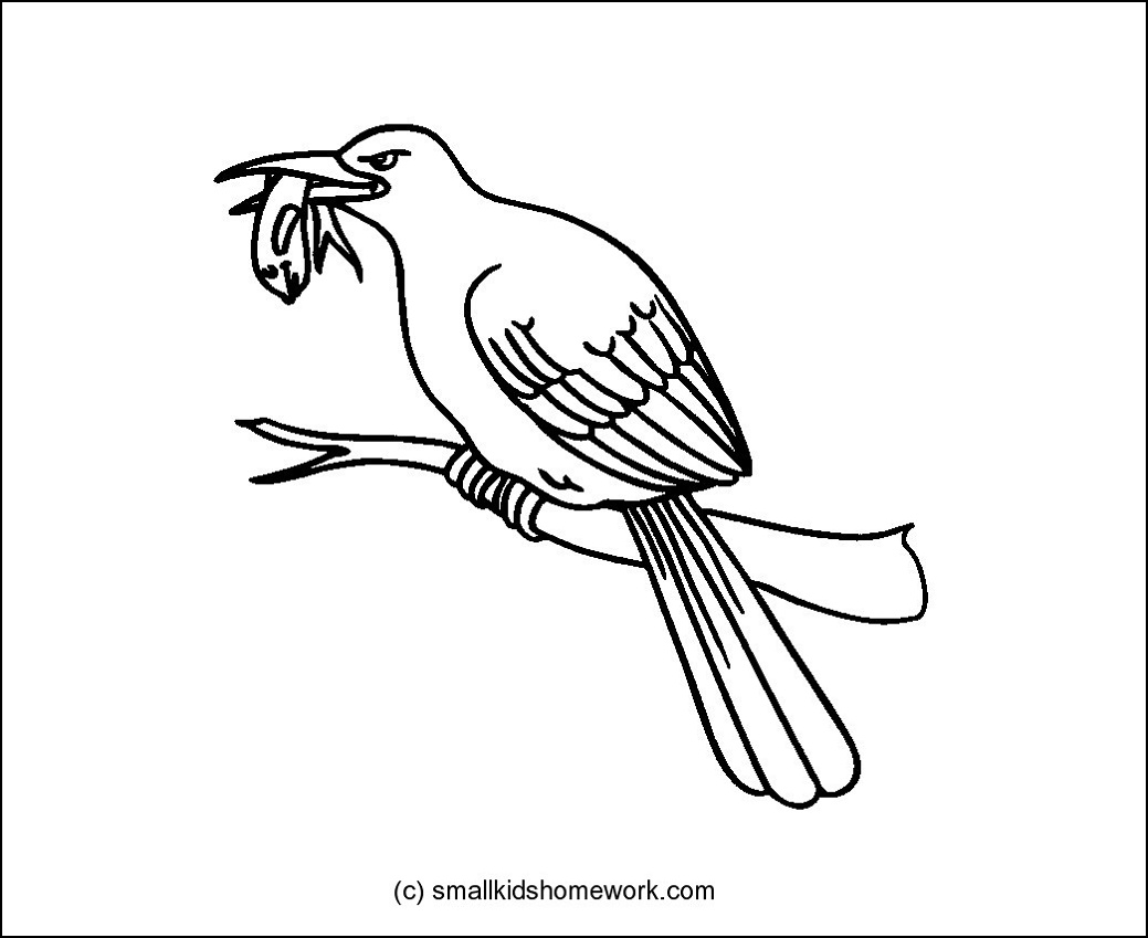 Kingfisher coloring #4, Download drawings