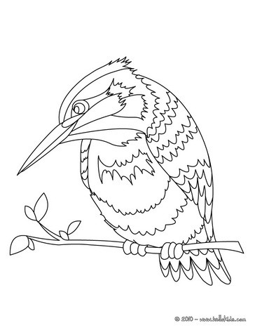 Kingfisher coloring #13, Download drawings