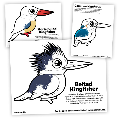 Kingfisher coloring #12, Download drawings