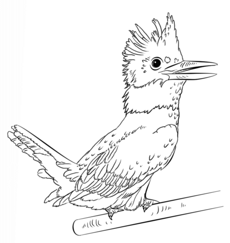Kingfisher coloring #10, Download drawings