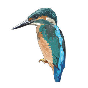 Belted Kingfisher svg #20, Download drawings