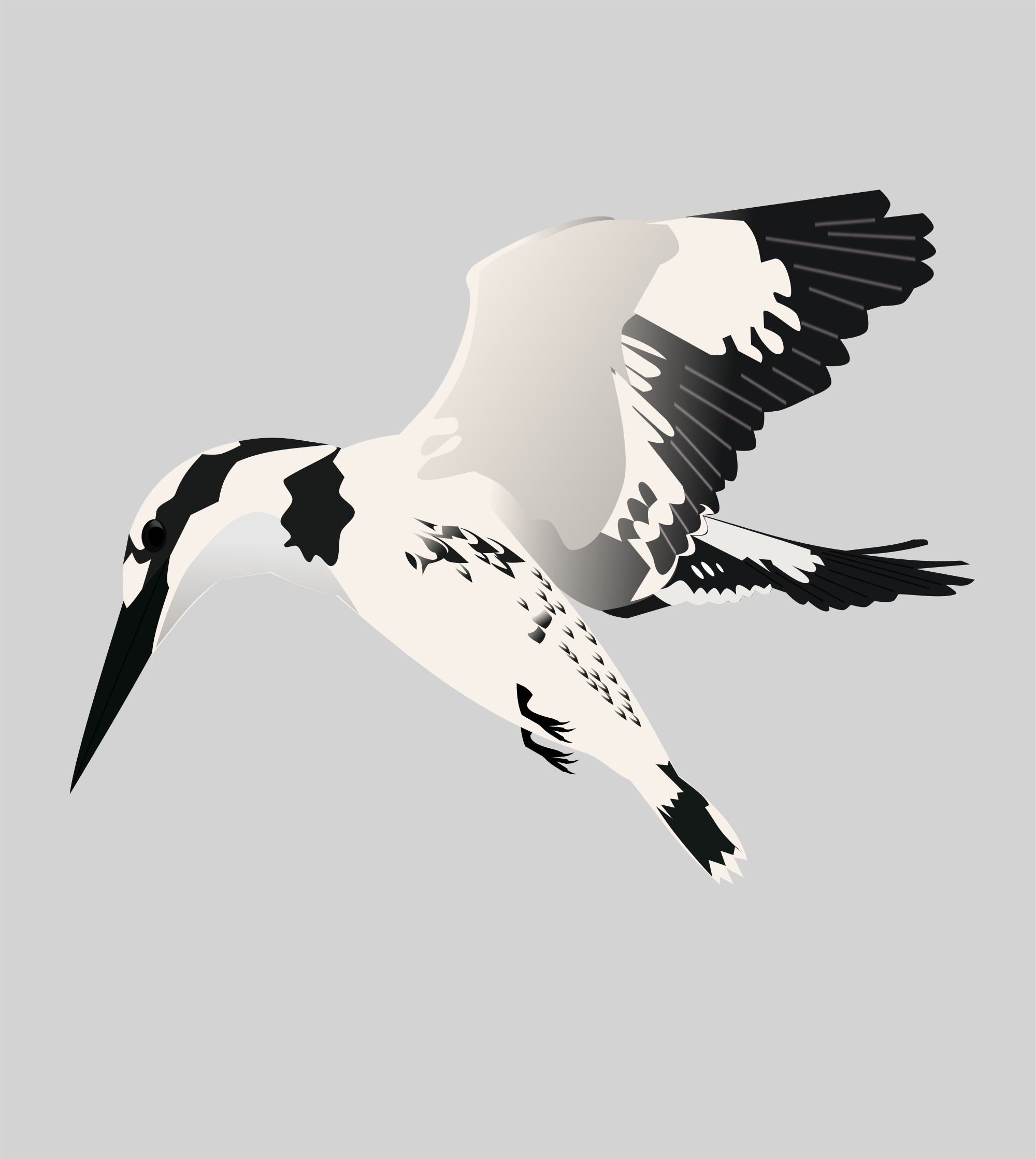 Kingfisher svg #14, Download drawings
