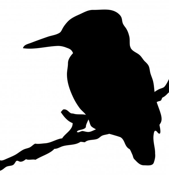 Kingfisher svg #17, Download drawings