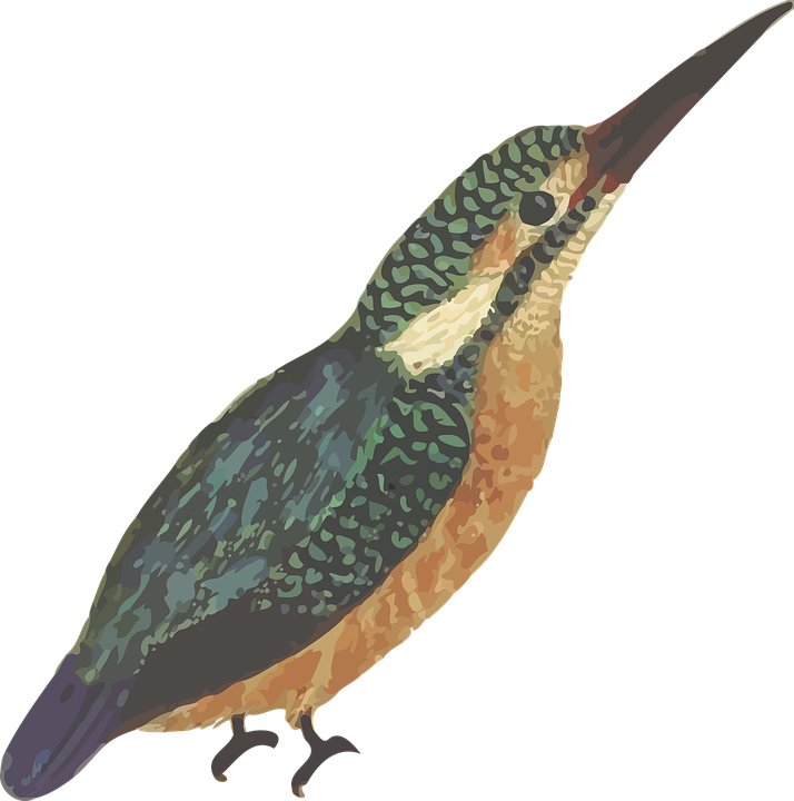 Kingfisher svg #2, Download drawings