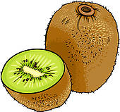 Kiwi clipart #20, Download drawings