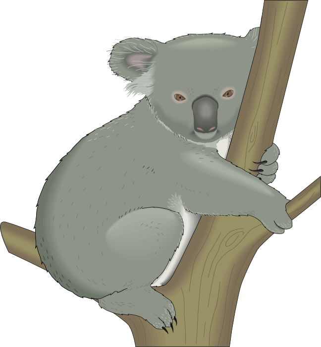 Koala Bear clipart #17, Download drawings