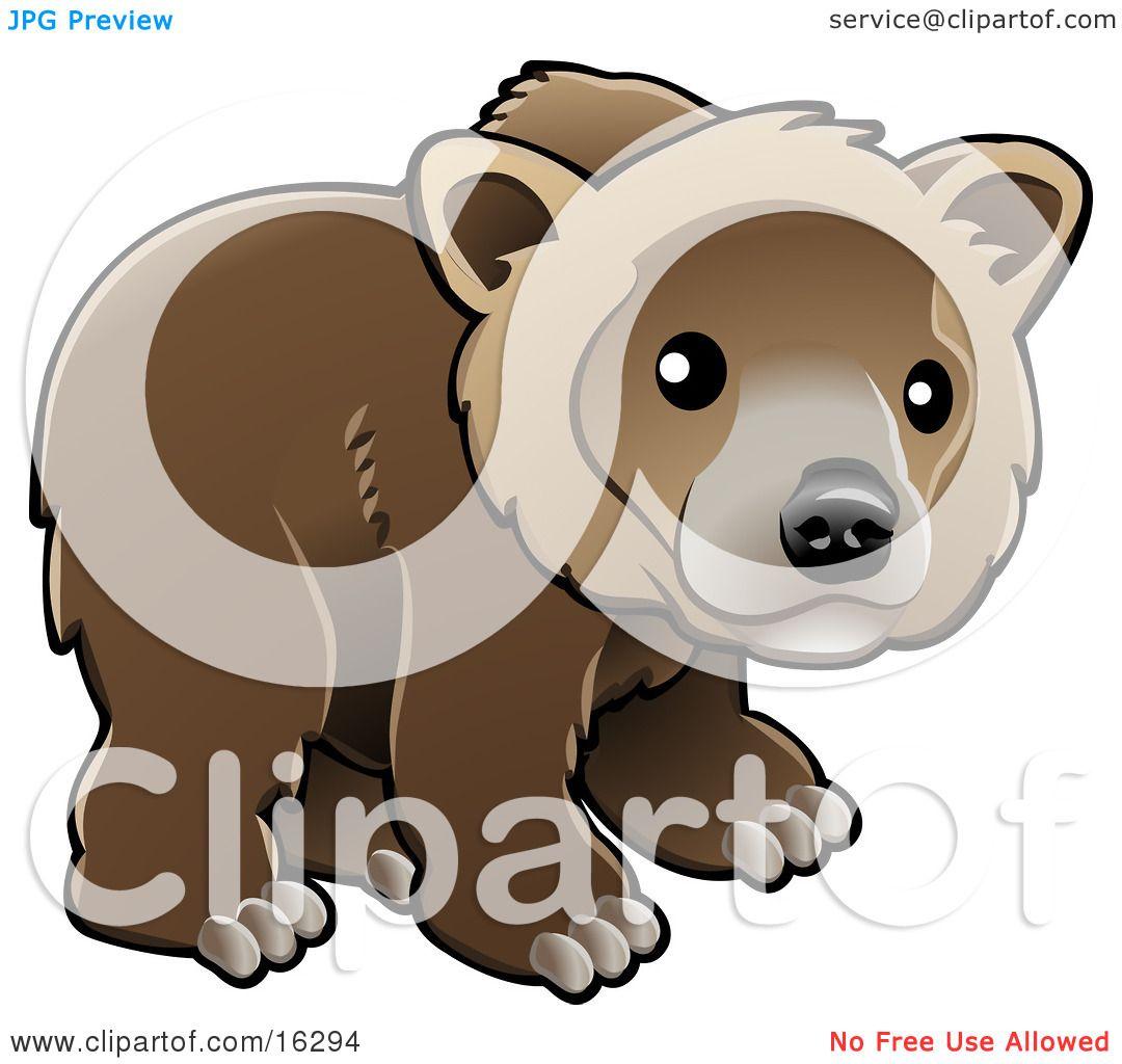 Kodiak Bear clipart #2, Download drawings