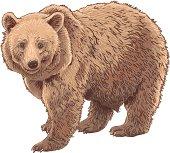 Kodiak Bear clipart #18, Download drawings