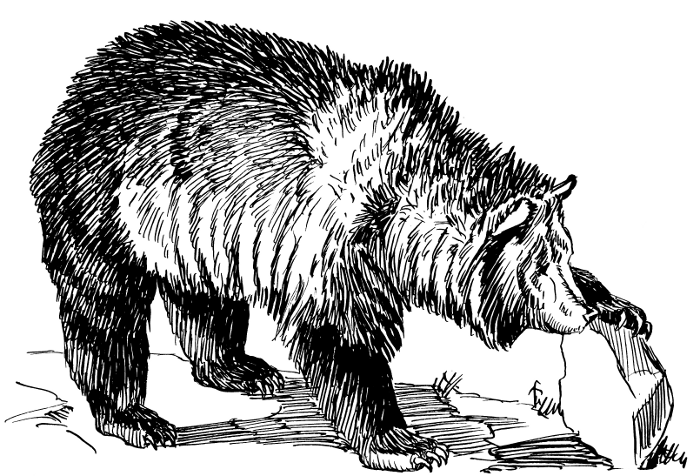 Kodiak Bear clipart #17, Download drawings
