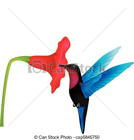 Kolibri clipart #13, Download drawings