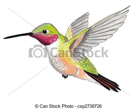 Kolibri clipart #12, Download drawings