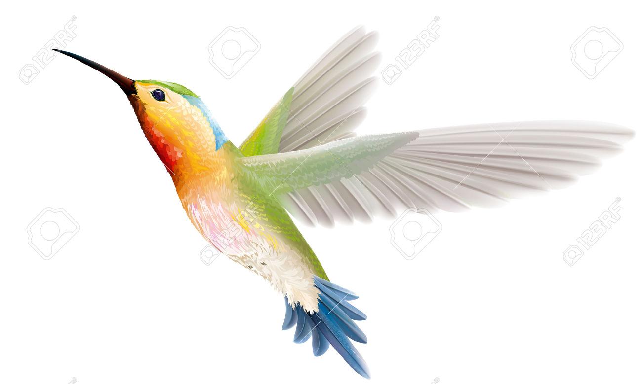 Kolibri clipart #5, Download drawings