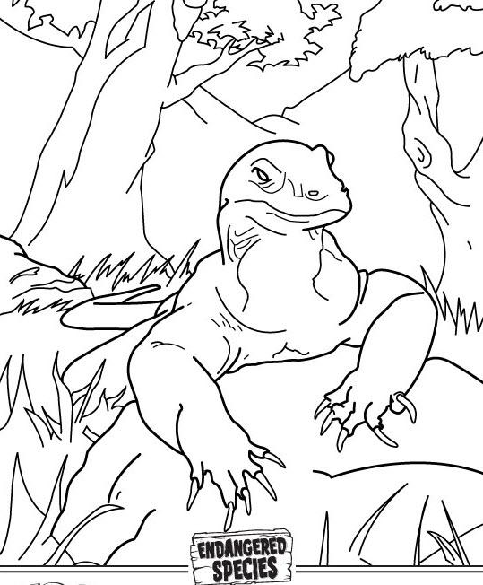 Komodo coloring #15, Download drawings