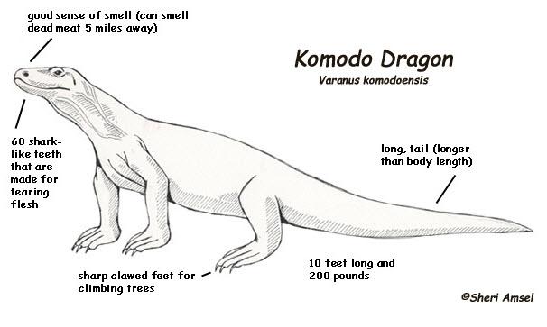 Komodo coloring #14, Download drawings