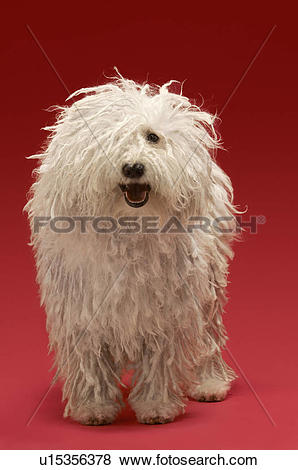Komondor clipart #8, Download drawings