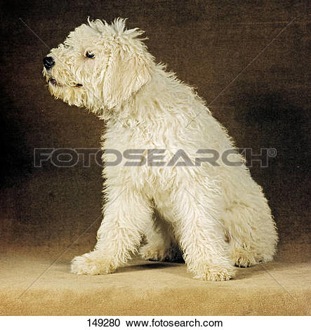 Komondor clipart #3, Download drawings