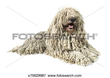 Komondor clipart #15, Download drawings