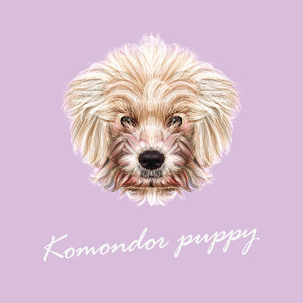 Komondor clipart #17, Download drawings