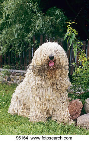 Komondor clipart #11, Download drawings