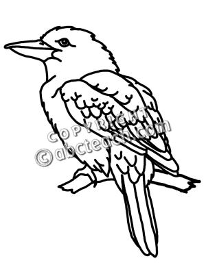 Kookaburra clipart #3, Download drawings