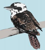 Kookaburra clipart #2, Download drawings