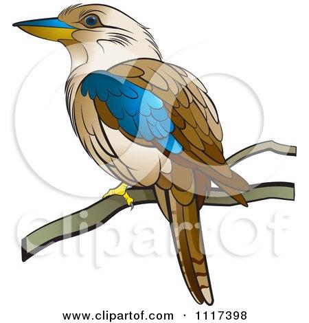 Kookaburra clipart #18, Download drawings