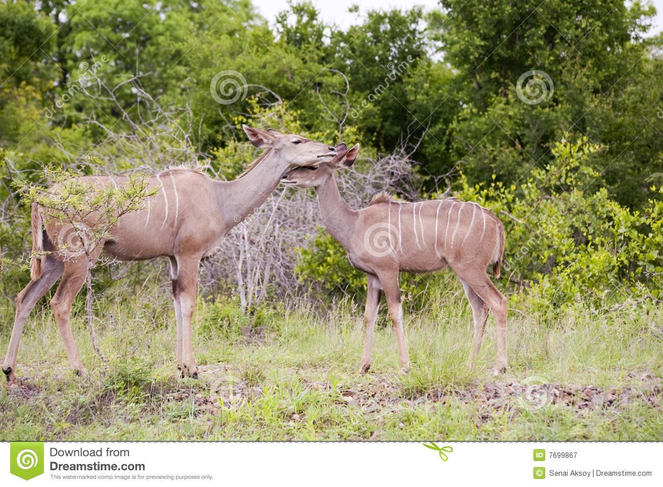 Kruger National Park clipart #13, Download drawings