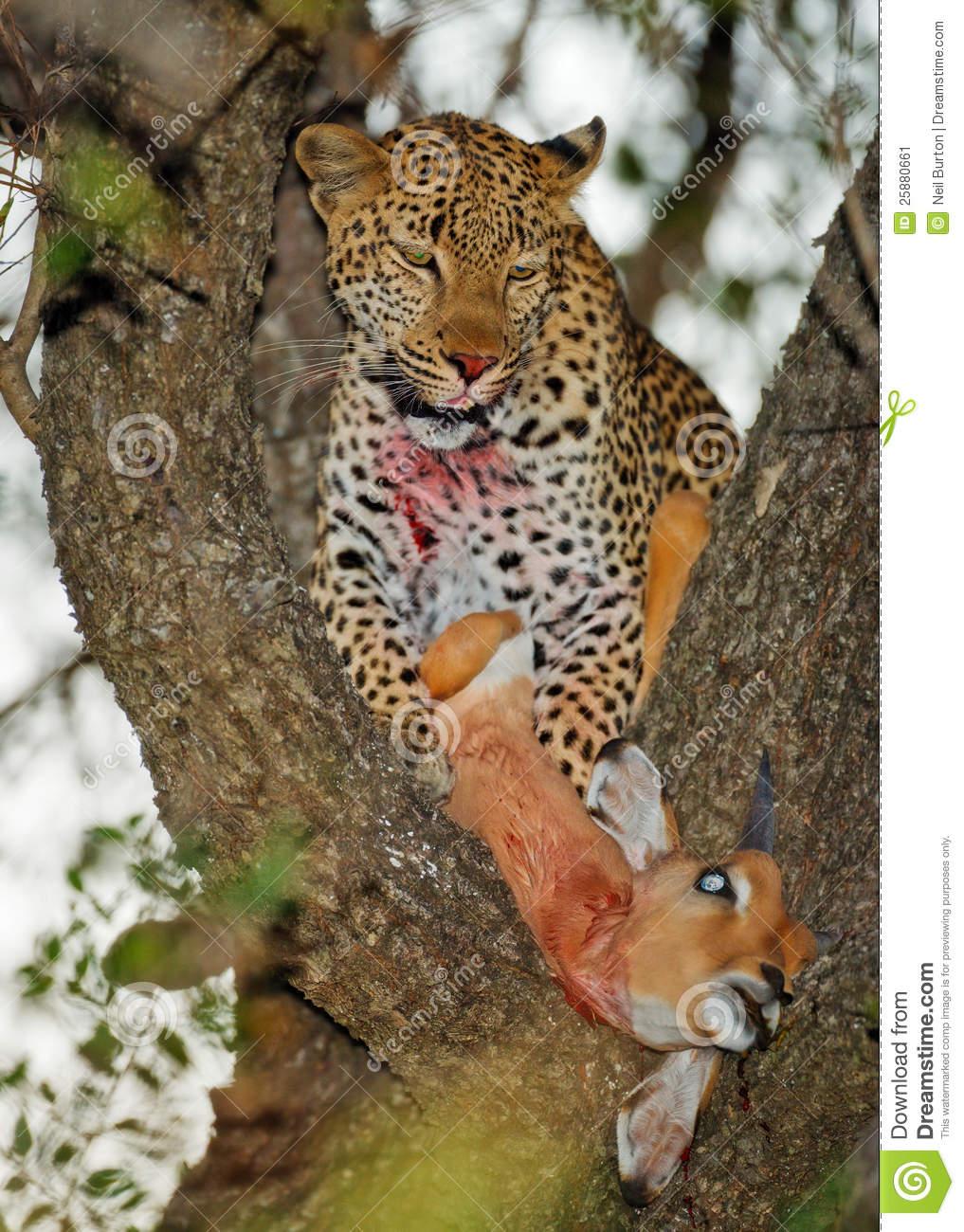 Kruger National Park clipart #12, Download drawings